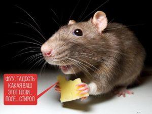 мышь и ЭПС