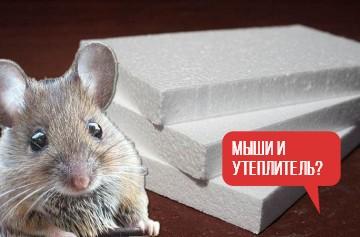 Заводятся ли мыши в минеральной вате